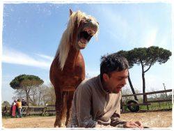 Attività con il Cavallo
